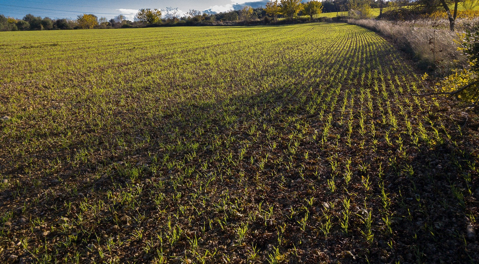 Start of bolting in winter wheat – how to support your crops now
